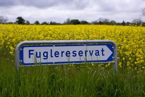 Fuglereservat ved Hov Vig